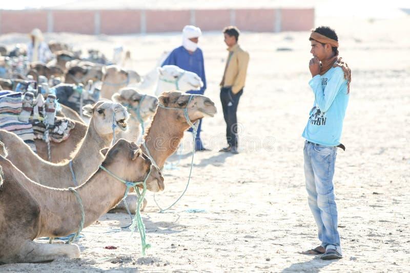 Beduínos com os camelos em Sahara imagem de stock