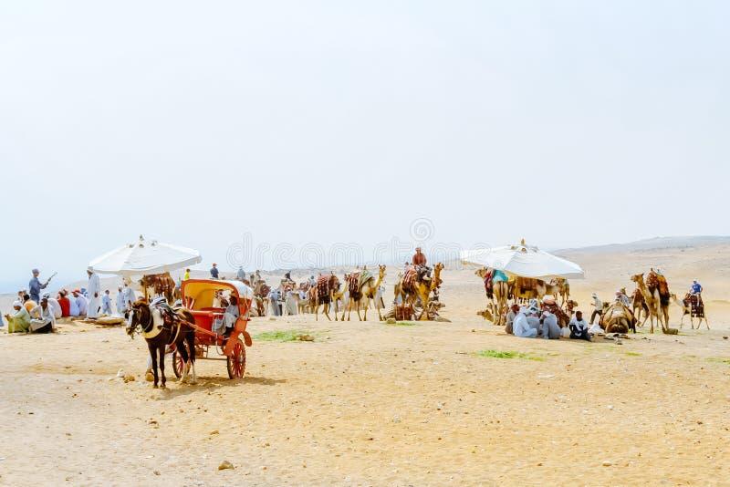Beduínos com os camelos no deserto Sahara giza Egypt foto de stock