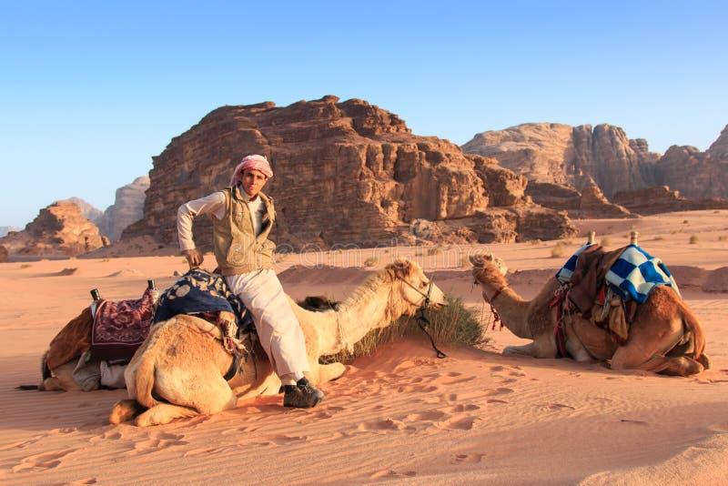 Beduínos que preparam os camelos para o turista que os montará no por do sol no deserto de Wadi Rum, Jordânia foto de stock
