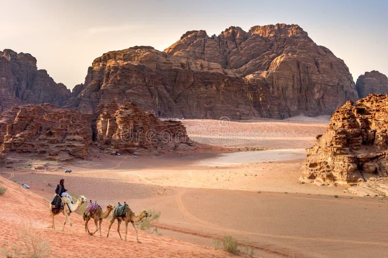 Beduin and camels in Wadi Rum desert in Jordan. royalty free stock photos