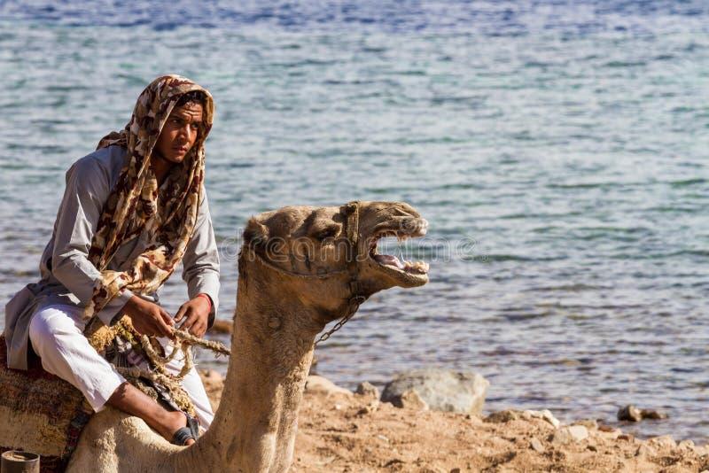 Beduin i wielbłąd plażą, Dahab, Egipt zdjęcia stock