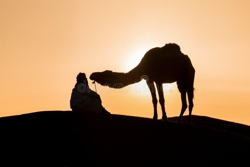 Beduin i wielbłąd w drodze przez piaszczystą pustynię Piękny zachód słońca z karawaną na Saharze, Maroko Pustynia z wielbłądem i  obraz stock