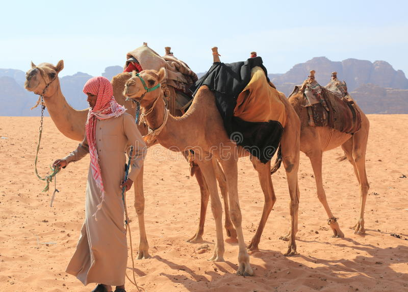 Beduina i ich wielbłądy zdjęcie royalty free