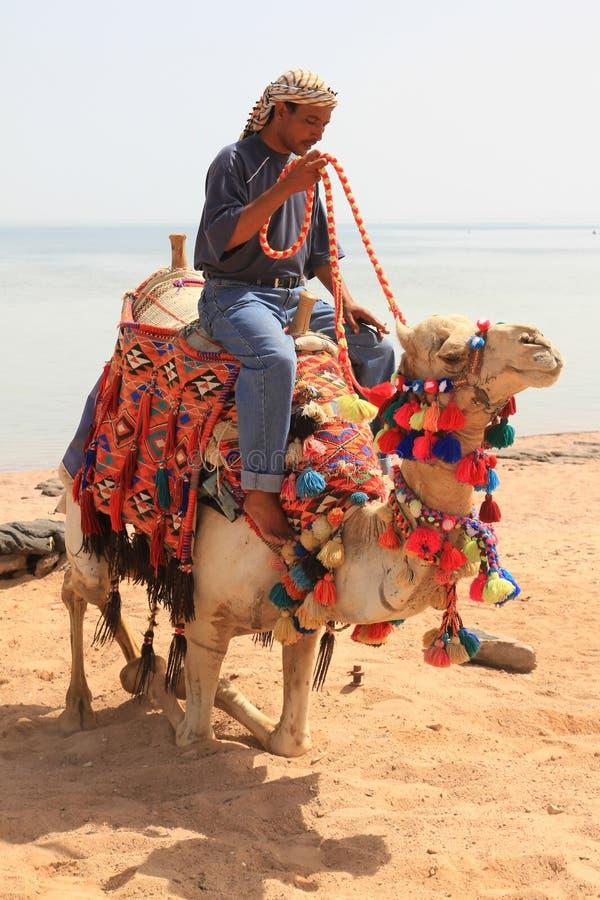 Beduine auf dem Kamel stockfoto