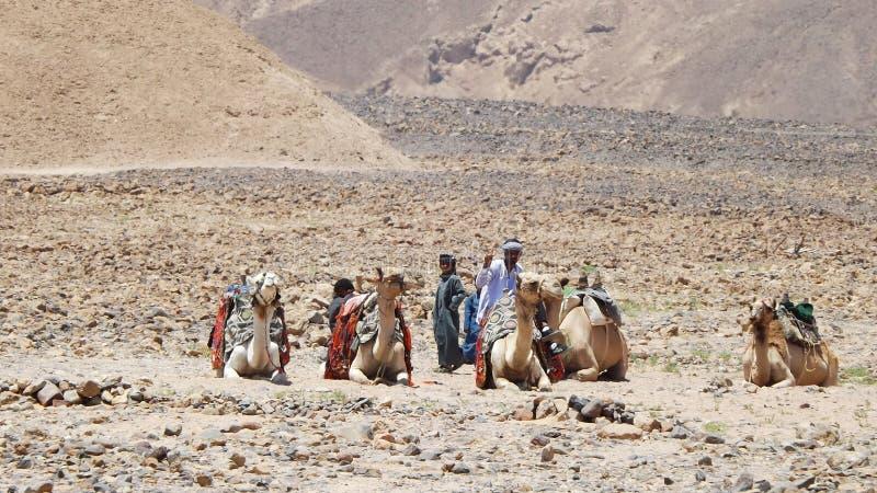Beduini nel campo immagine stock