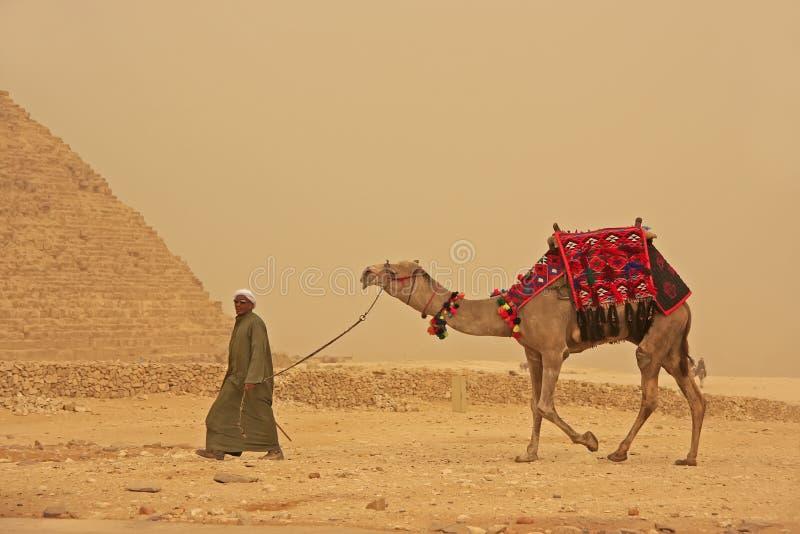 Beduino che cammina con il cammello vicino alla piramide di Giza, Il Cairo fotografia stock