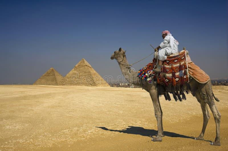 Beduino sul cammello contro le piramidi nell'Egitto  fotografia stock