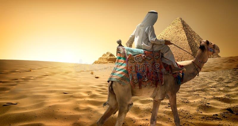 Beduino sul cammello in deserto immagine stock libera da diritti