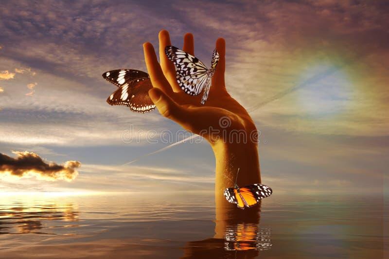Bedwingende vlinders stock afbeelding