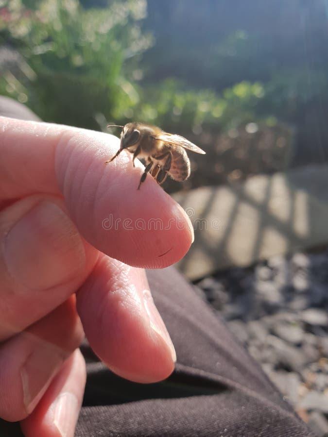 Bee001 imagen de archivo