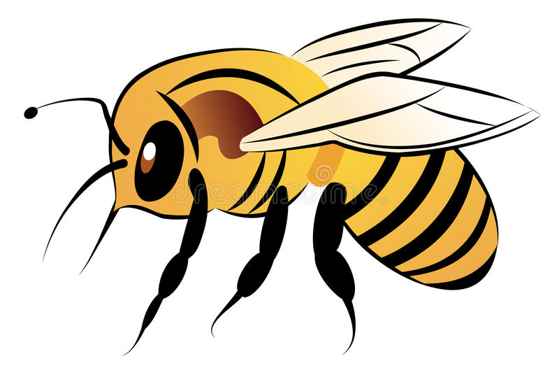 Download Bee stock illustration. Illustration of animals, cycle - 12912787