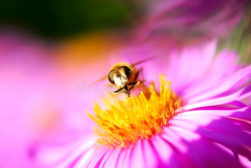 Download Bee stock photo. Image of nice, composition, needle, flower - 21776408