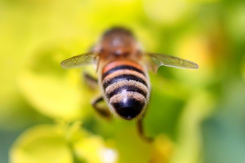 Bee. This is macro photo of bee stock image