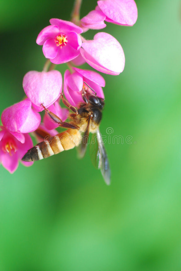 Download Bee stock image. Image of green, wings, little, spring - 3171929