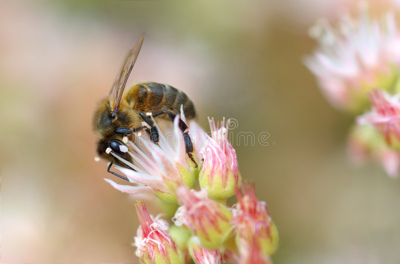 Download Bee Stock Images - Image: 750074