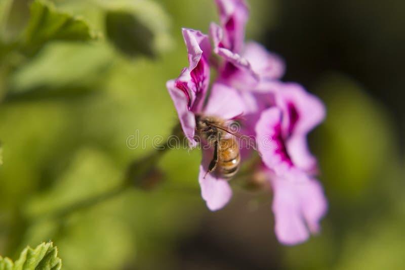 Download Bee stock photo. Image of purple, yellow, orange, many - 793266