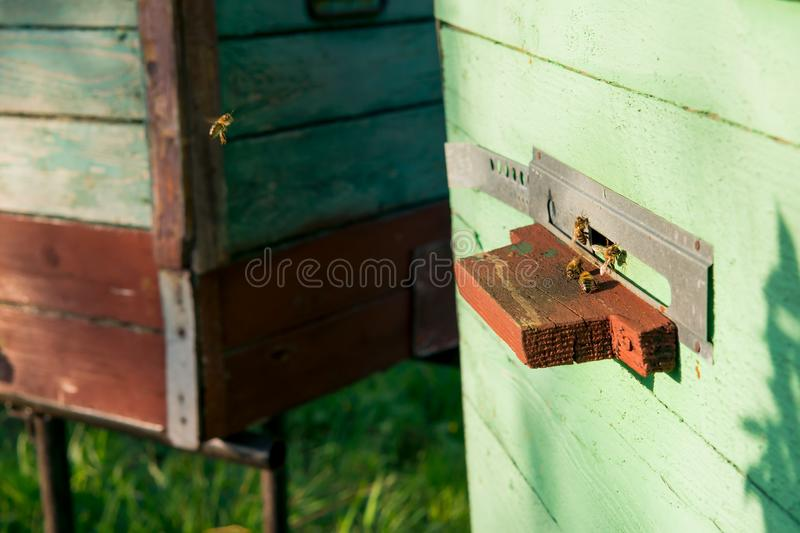 Old hive with bees. Bee apiary. bee hives. old wooden beehive with bees royalty free stock images