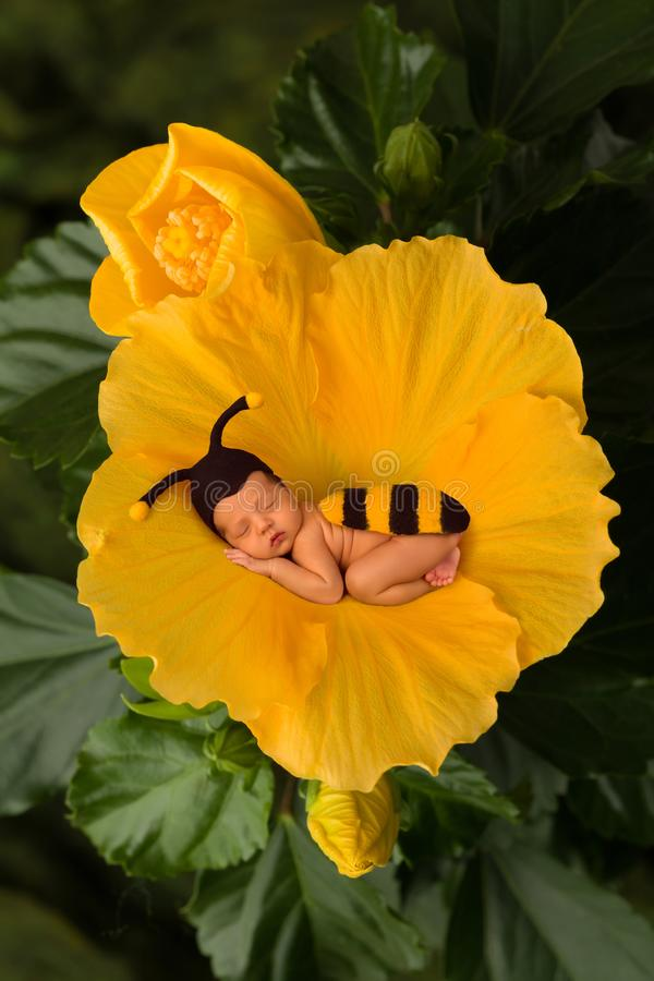 Bee baby in flower. Newborn baby in bee outfit sleeping in a yellow flower royalty free stock photos