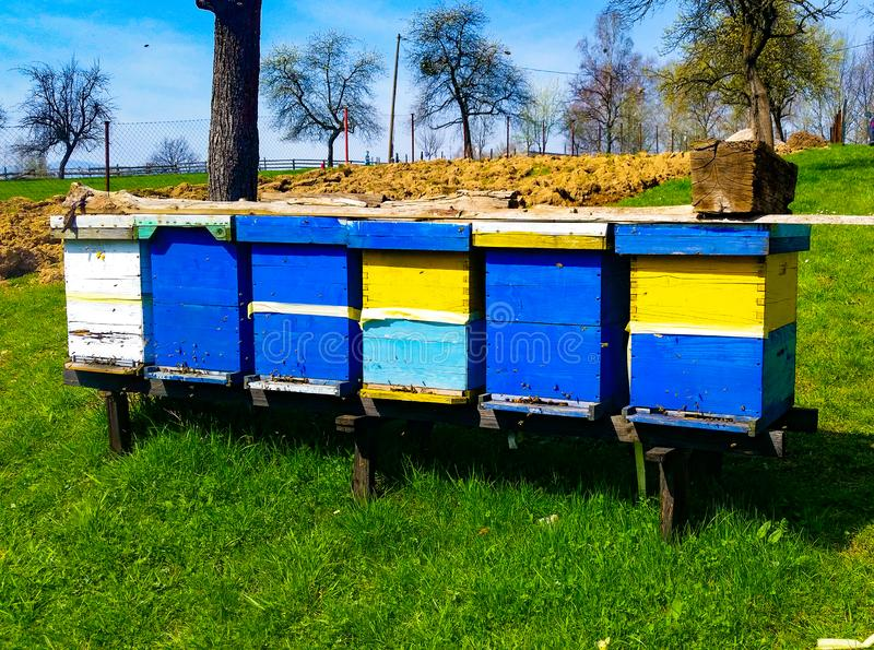 Wooden bee hives stock photo