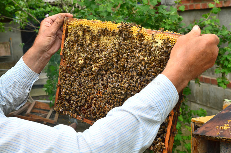 Bee beehive stock photos