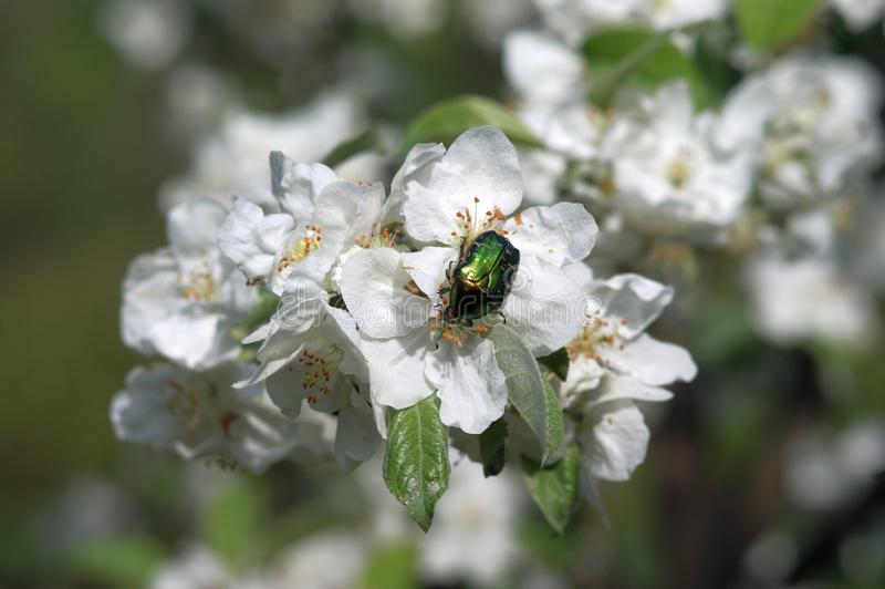 Bee, Blossom, Insect, Pollinator Free Public Domain Cc0 Image