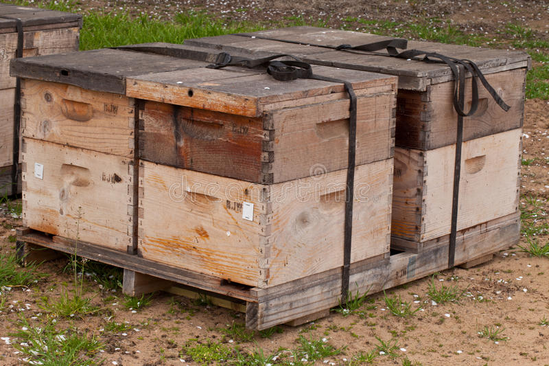 Download Bee Boxes Used To Pollinate An Almond Orchard Stock Image - Image: 32022193