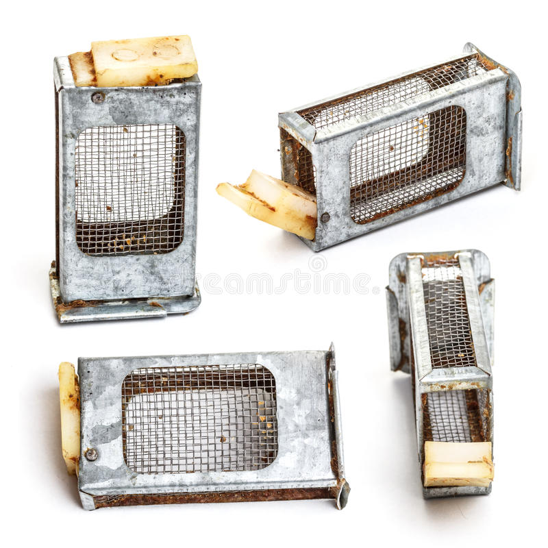 Bee cage royalty free stock image
