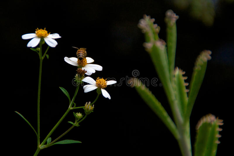 Download Bee Collecting Pollen Stock Photos - Image: 37762193