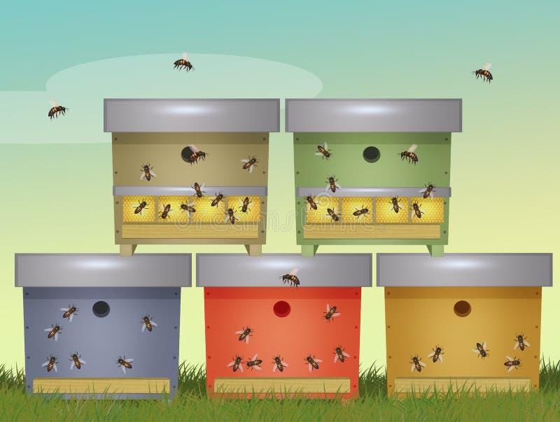 Bee colonies in beehives. Illustration of bee colonies in beehives stock illustration