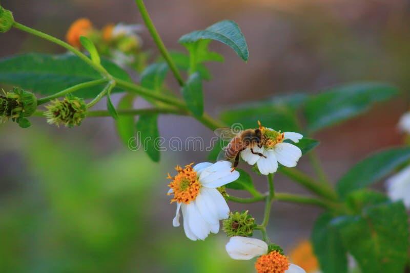Bee. Delray beach Florida palm beach stock photos