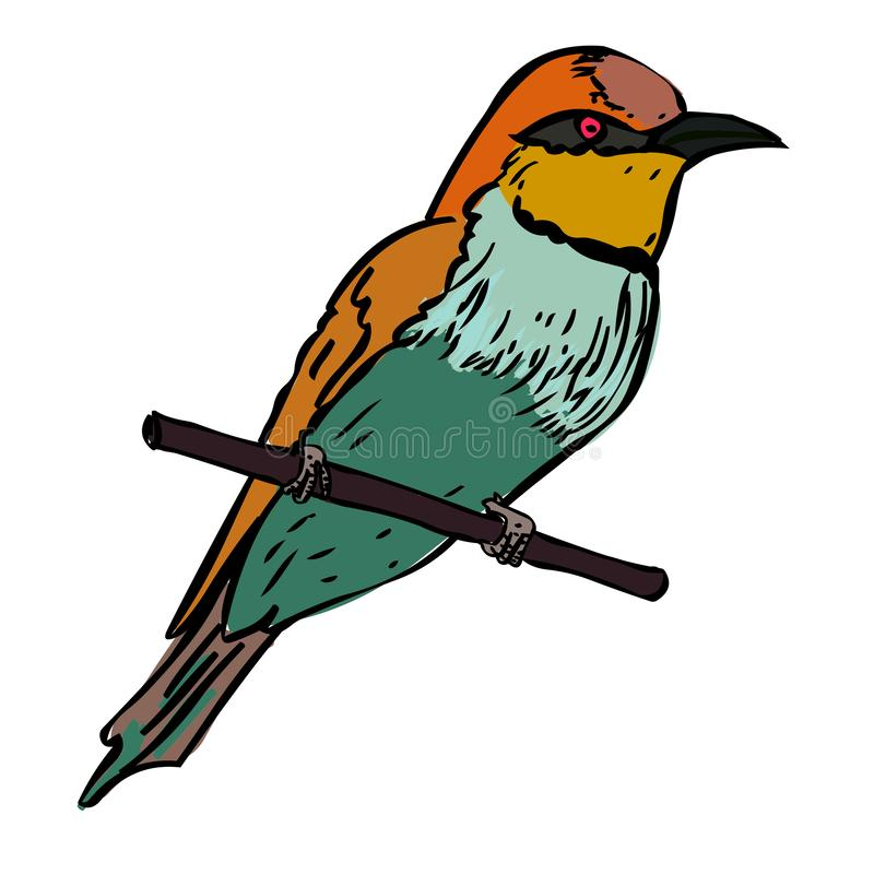 Bee eater bird vector illustration Cartoon bird. Isolated on white background royalty free illustration