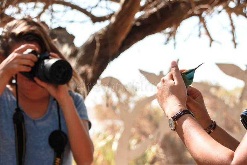 Bee eater fotografato secondi prima di realese immagini stock libere da diritti