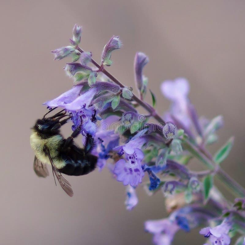 Bee enjoying life. Flowrr, flowre, flower, color royalty free stock photo