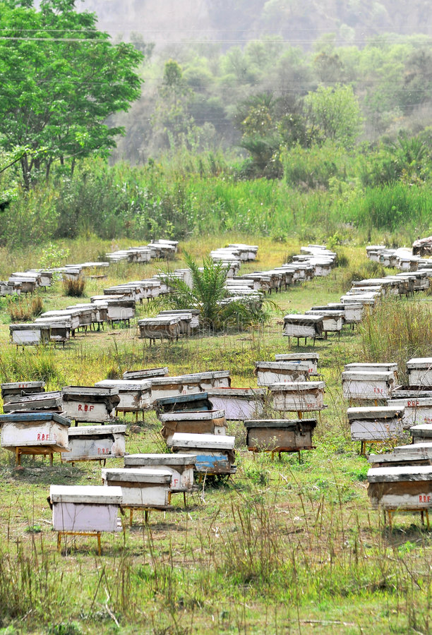 Download Bee Farming Stock Image - Image: 8894971