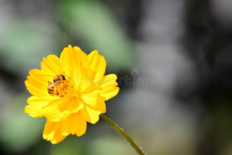 Bee feeding. Beautiful natural flower growing the banks of the river with a sweet little bee feeding royalty free stock photo