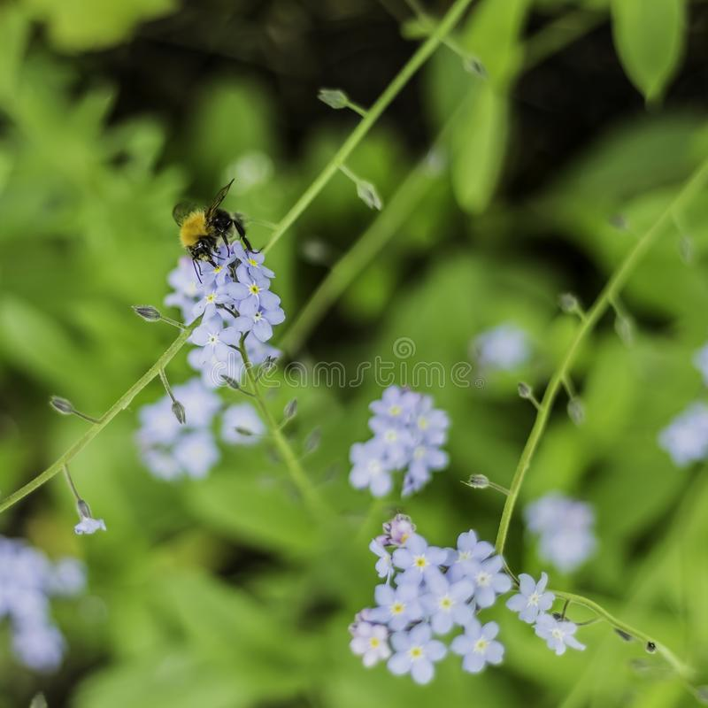 Bee Feeding Nectar From A Plant On A Sunny Day royalty free stock image