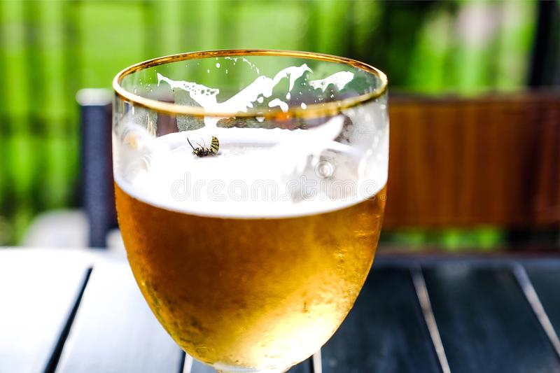 The bee fell in the sweet cider. Refreshing Apple cider on a wooden table. Cider in a glass Cup. Summer street cafe. On the background of green trees royalty free stock image