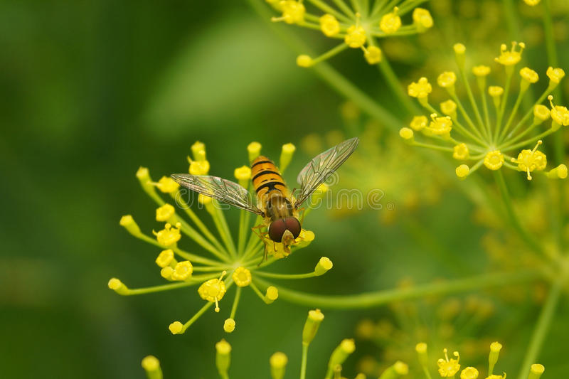 A bee on a flower stock image