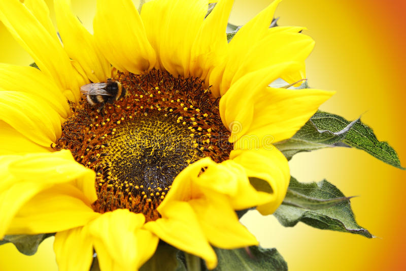 Download Bee and flower stock image. Image of insect, pollen, flower - 28965745