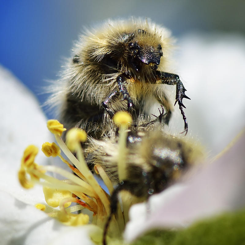 Download Bee On Flower Stock Image - Image: 38670661