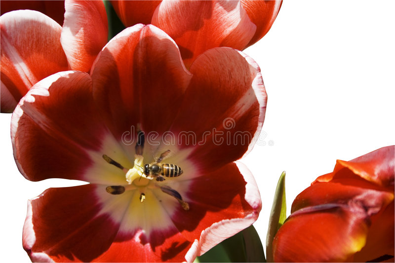 Download Bee and flower stock image. Image of color, growth, stamens - 7810505