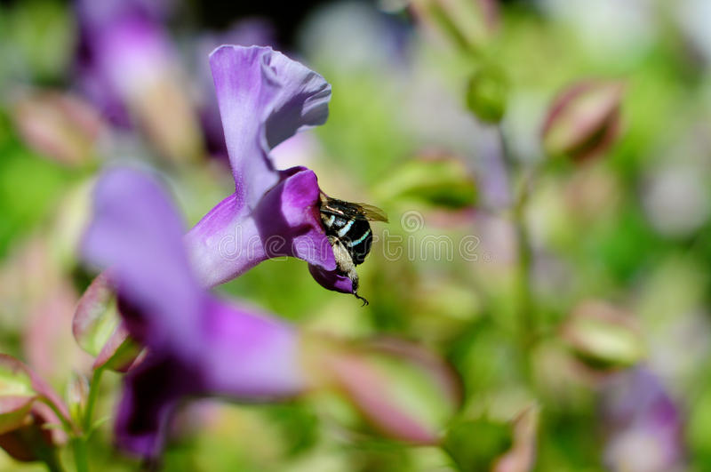 Bee in a flower stock images