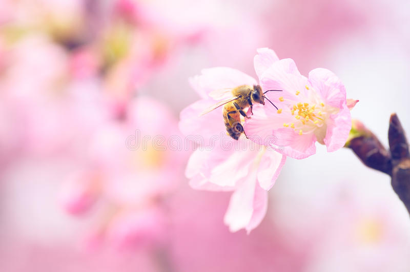 Download Bee and Flower stock photo. Image of beauty, busy, dining - 69250090