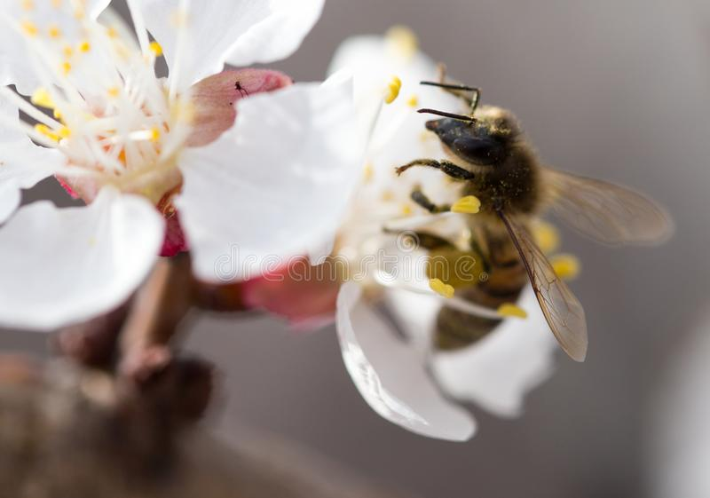 Bee on a flower in the nature. macro.  stock images