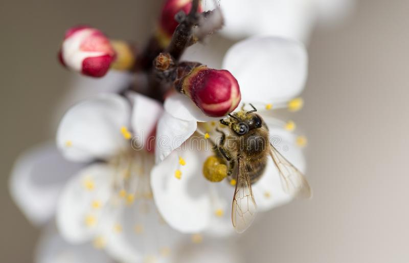 Bee on a flower in the nature. macro.  stock photo