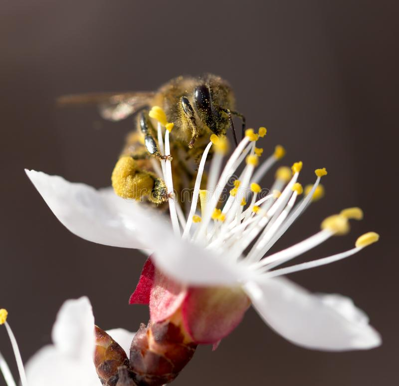 Bee on a flower in the nature. macro.  stock photos