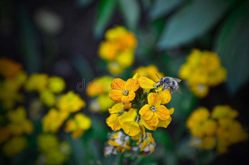 Download Bee On Flower Royalty Free Stock Photography - Image: 34227387