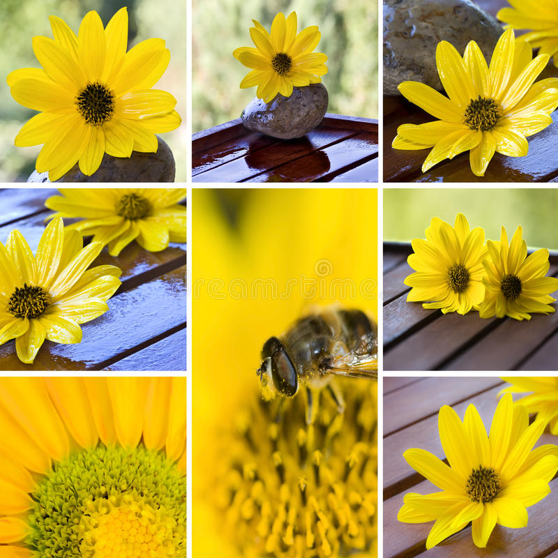 Bee and flowers. Collection bee and flowers, insects and nature stock photo
