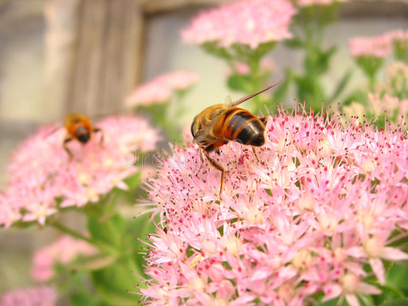 Download Bee and flowers stock image. Image of garden, green, life - 12600847