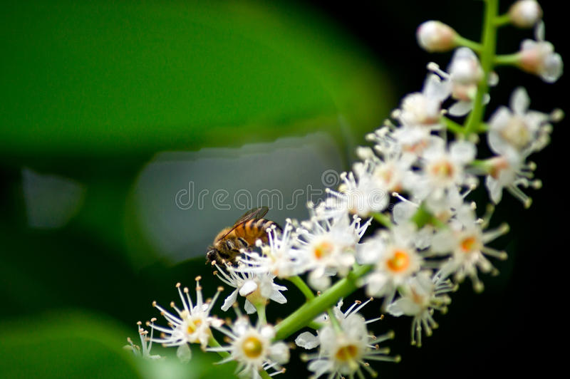 Download Bee on flowers stock image. Image of light, copy, background - 37423633